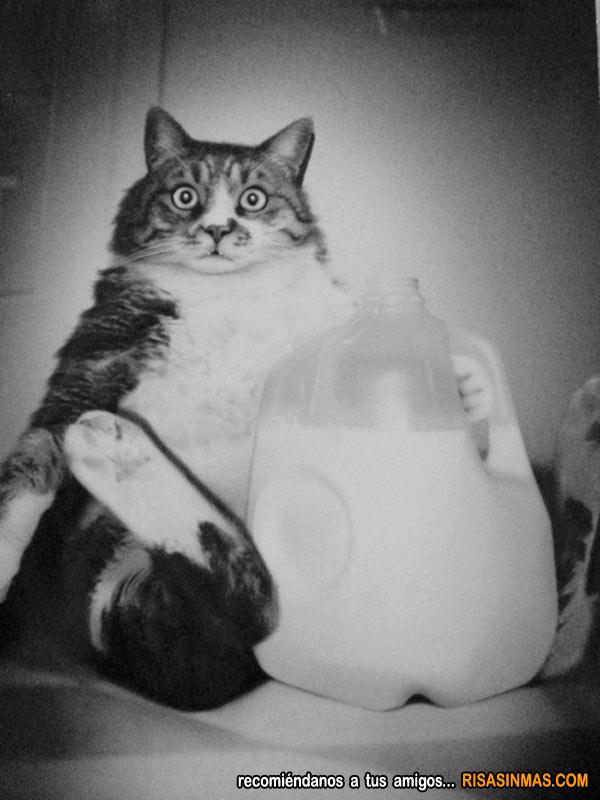 Gato pillado in fraganti