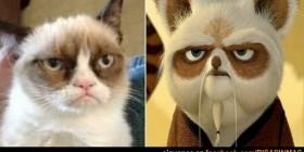 Parecidos razonables: Gato cabreado y Maestro Shifu