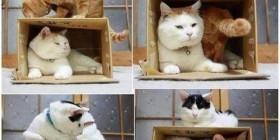 Cómo capturar a un gato