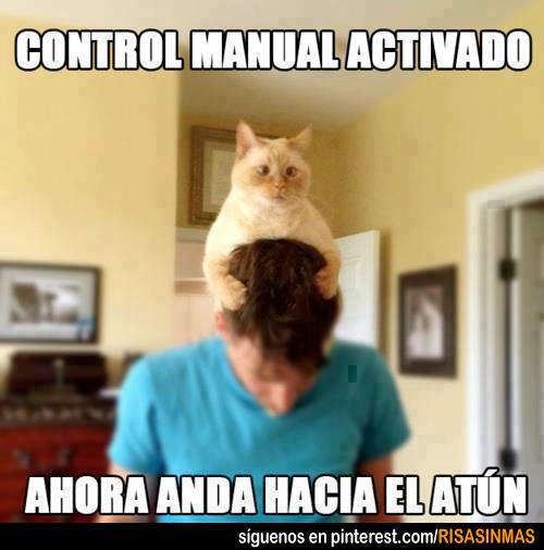 Gato con el control manual activado
