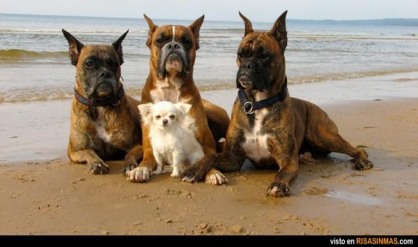 El perro más seguro del mundo