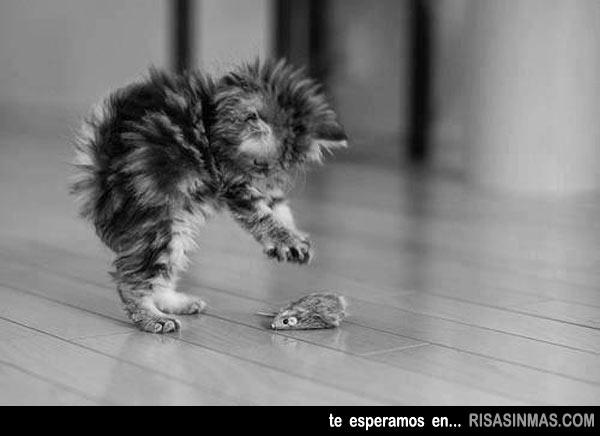 Gatito aprendiendo a cazar