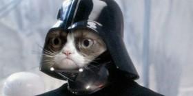El gato cabreado aparecerá en Star Wars VII