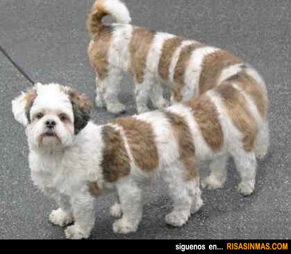 Nueva raza de perro ciempiés