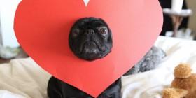 ¡Odio San Valentín!