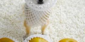 Disfraces perrunos: Manzana