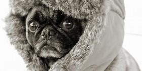 Perro preparado para la ola de frío
