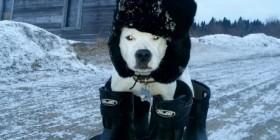 Así van los perros en Rusia