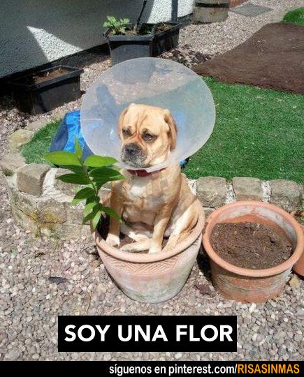 Soy una flor