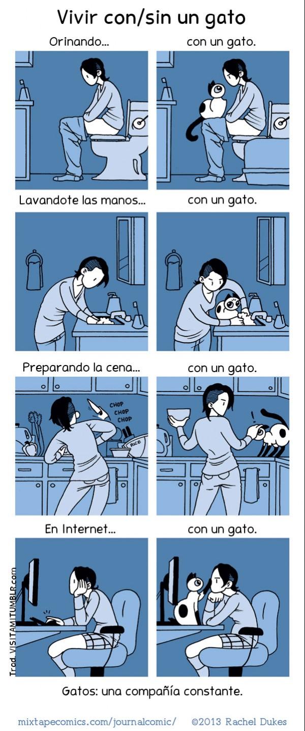 Vivir con (y sin) un gato
