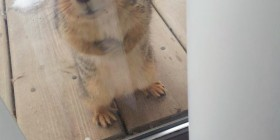 ¿Puedo entrar? Tengo frío