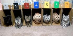 Por esto no se hacen carreras de gatos