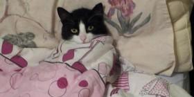Gatito enfriado y en cama