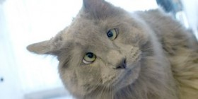 Gato hipnotizado