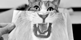 ¿Gato o León?