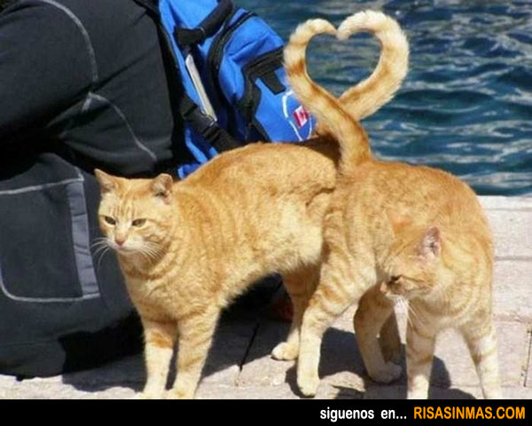 Los gatos en San valentín