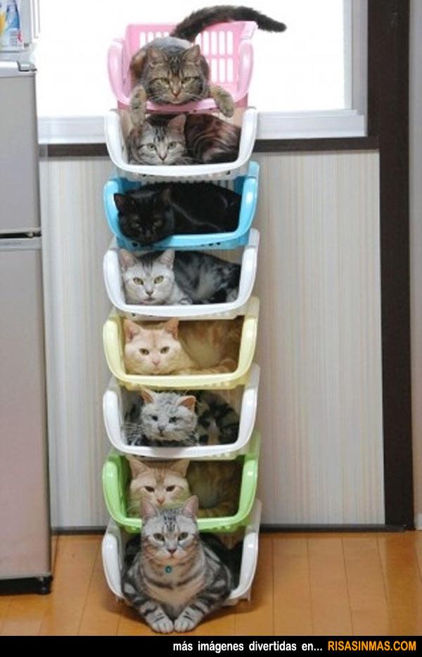 Gatos bien ordenados