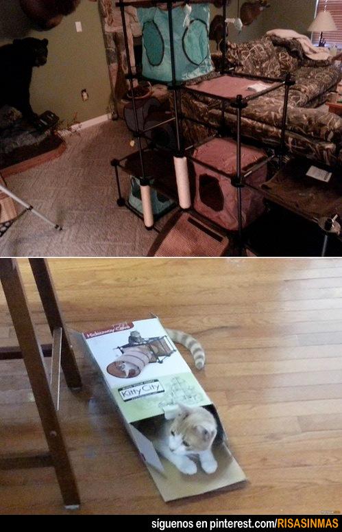 La mejor casa para gatos