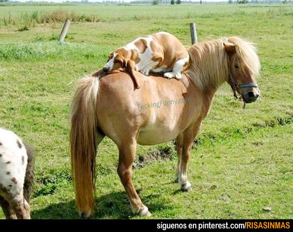 Lo normal: durmiendo sobre un caballo