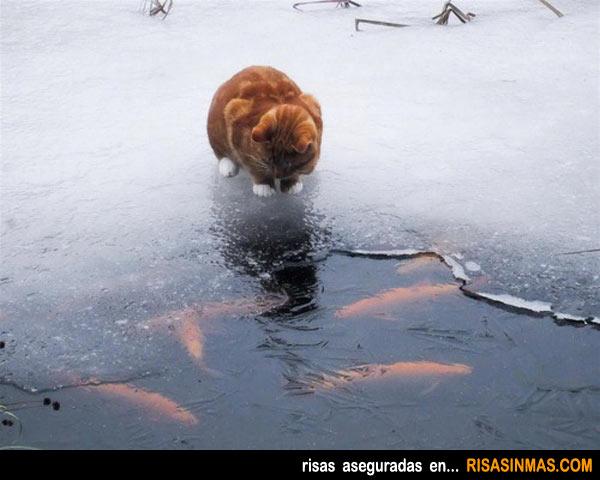 Gato a punto de saltar sobre el hielo en 3...2...1