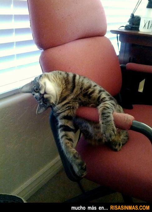Posturas gatunas: sentado