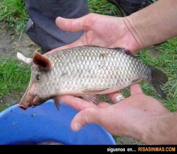Animales curiosos: Cerdo - Pez