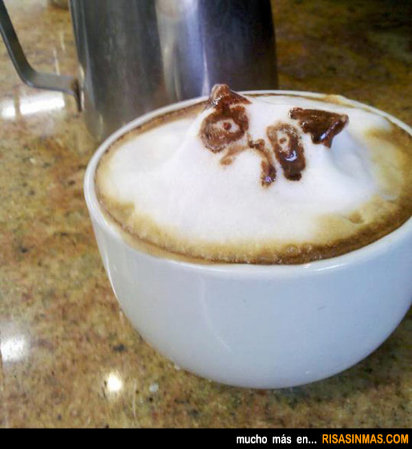 Café gato cabreado