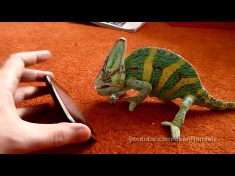 Camaleón asustado por un iPhone