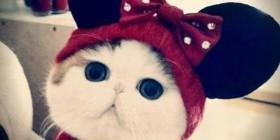 Disfraces gatunos: Minnie Mouse