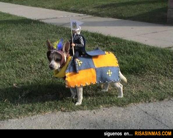 Disfraces perrunos: Caballero Medieval
