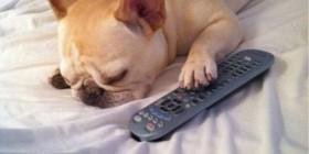 Dormido delante de la televisión