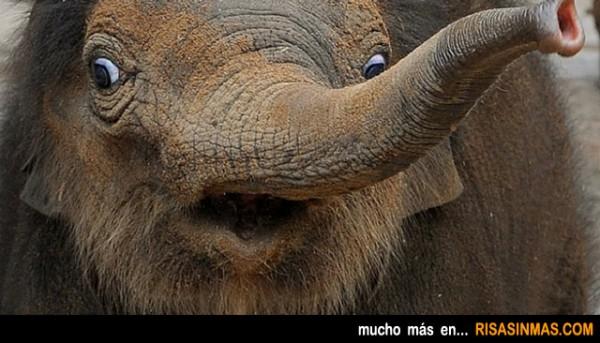 Elefantito de ¡VIERNES!