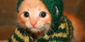 Gatito protegido contra el frío