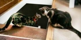 Gato ayudando a bajar las escaleras a otro