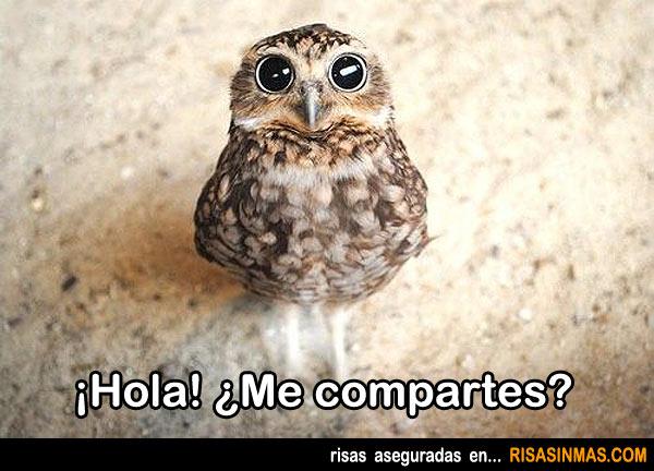 ¡Hola! ¿Me compartes?