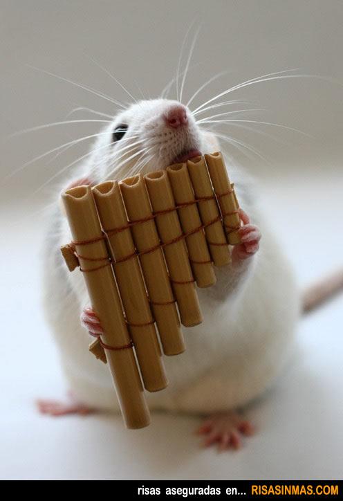 La rata flautista