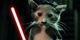 Los gatitos Jedi contraatacan