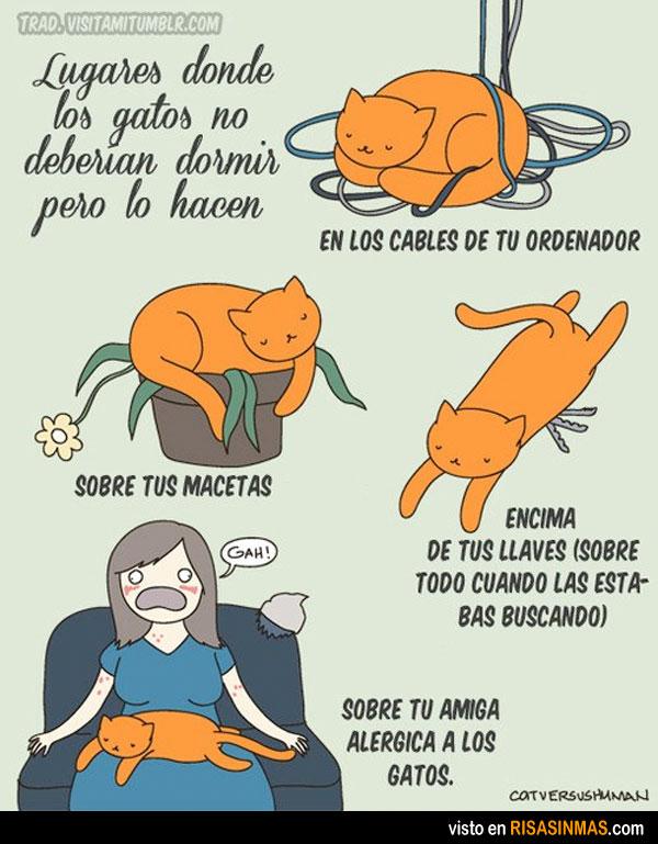 Lugares donde los gatos no deberían dormir