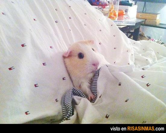 Lunes, creo que me quedo en la cama