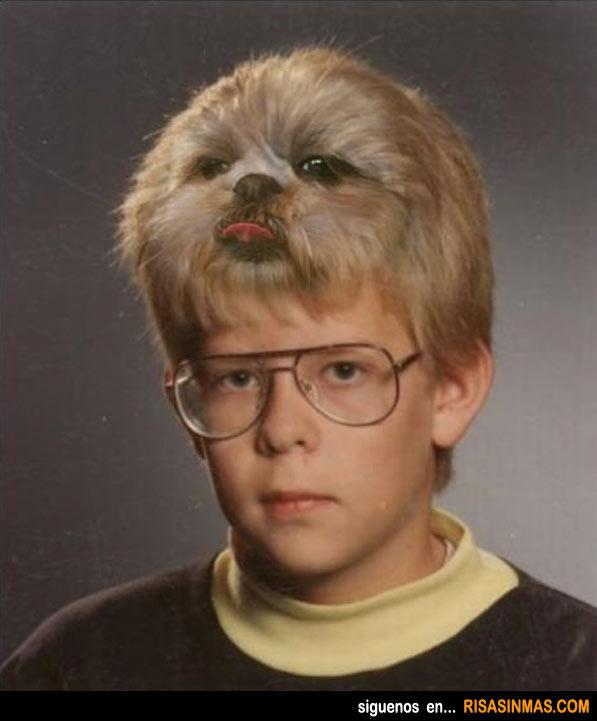 Peinado tipo perro