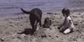 Un perro muy oportuno
