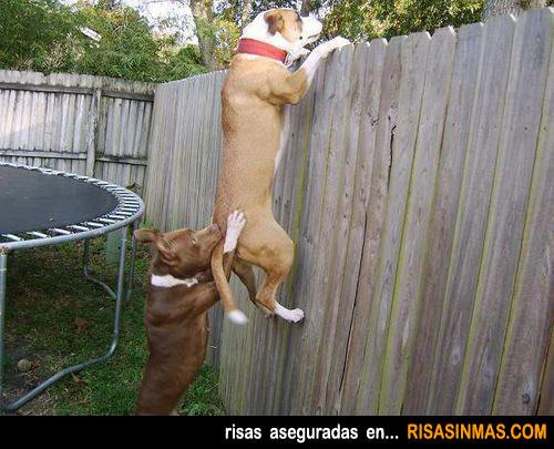 Perros trabajando en equipo