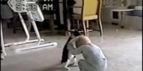 Terrible pelea entre un gato y un bebé