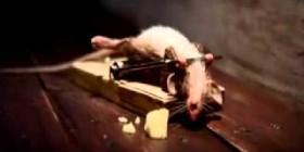 Un ratón en plena forma