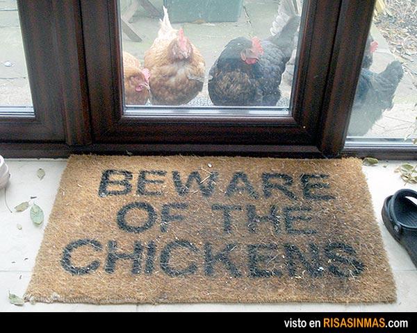 ¡Cuidado con las gallinas!