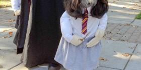 Disfraces perrunos: colegiala