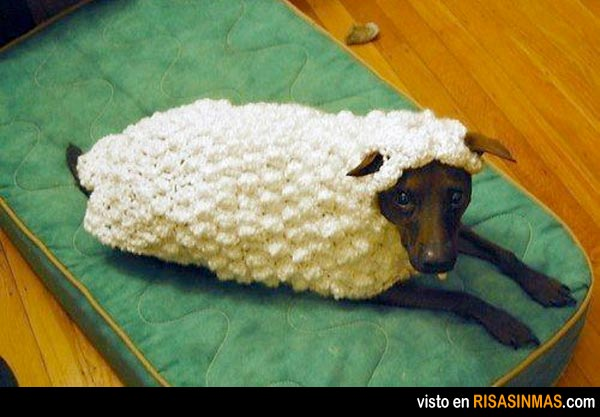 Disfraces perrunos:  de oveja
