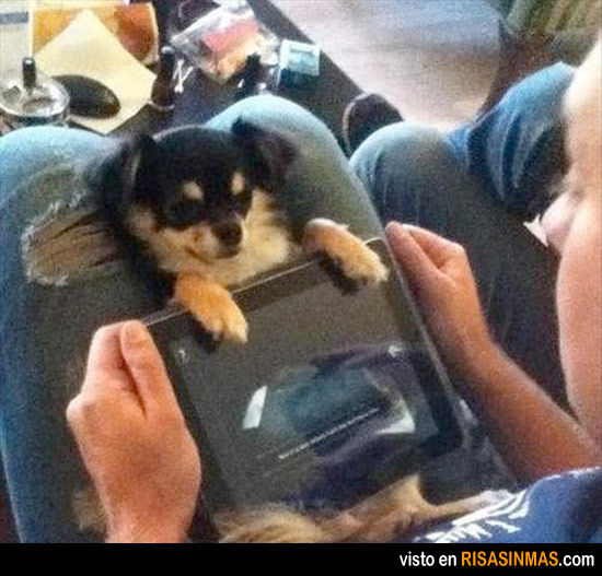 El mejor soporte del mundo para iPad