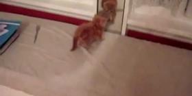 Gatito que descubre un espejo