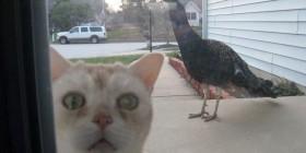 Déjame entrar, estoy asustado